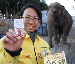 Зоопарк Уцуномия делает амулеты для студентов из слоновьего навоза