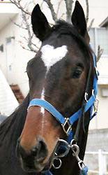 Скаковая лошадь с сердечком на лбу завоёвывает сердца людей
