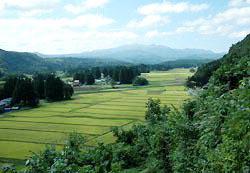 В Японии идёт поиск владельцев для рисовых полей в историческом районе