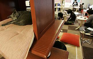 Кошачьи кафе в Токио принесут покой в город