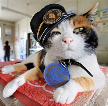 Японская железная дорога сделала кошку «станционным смотрителем»