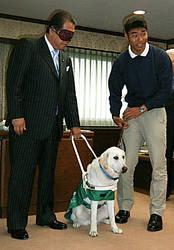 Частная японская тюрьма запускает программу обучения собак-поводырей среди своих заключённых