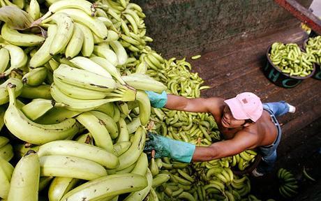 Японию поразило повальное увлечение банановой диетой