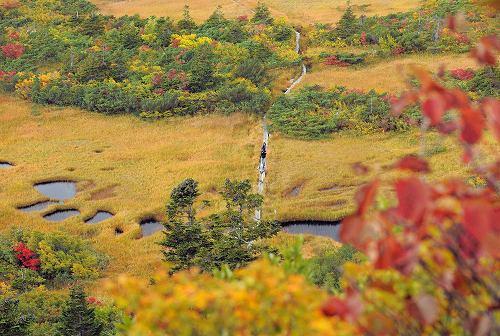 Осенние листья в Японии