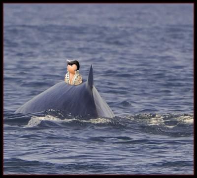 На спине кита