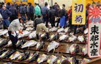 На рынке Цукидзи был продан тунец за 9,63 млн. иен