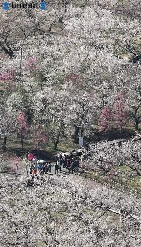http://news.leit.ru/wp-content/uploads/2009/02/Japan_from_the_air_2008_18.jpg