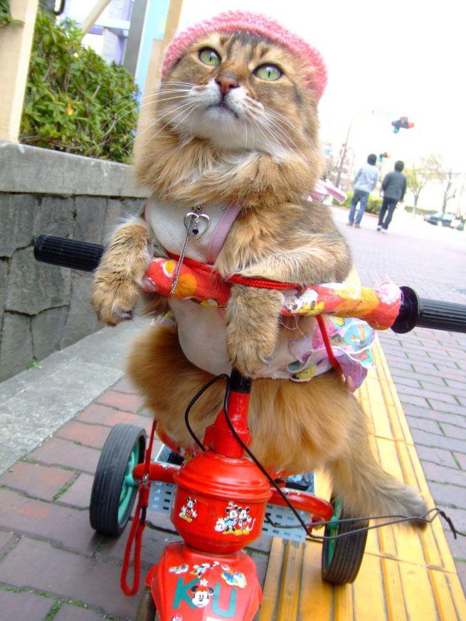 Фото дня: мода для японских кошек