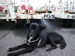 Бродячая собака, пойманная в аэропорту Нарита