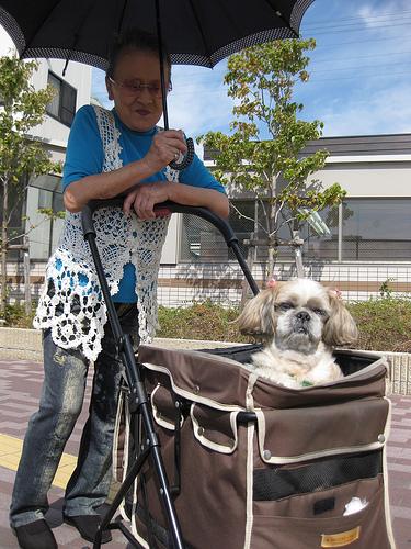 Многие пожилые японцы живут одни или только со своими домашними питомцами