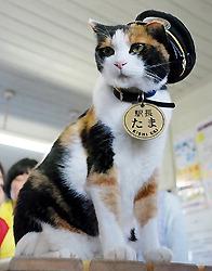 Кошка Тама на своём посту. 13-е октября 2008 г.