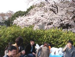 Студенты устроили вечеринку под вишневыми деревьями
