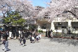 Дети под вишневыми деревьями в первый день начальной школы