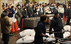 Иностранные туристы на рыбном аукционе рынка Цукидзи
