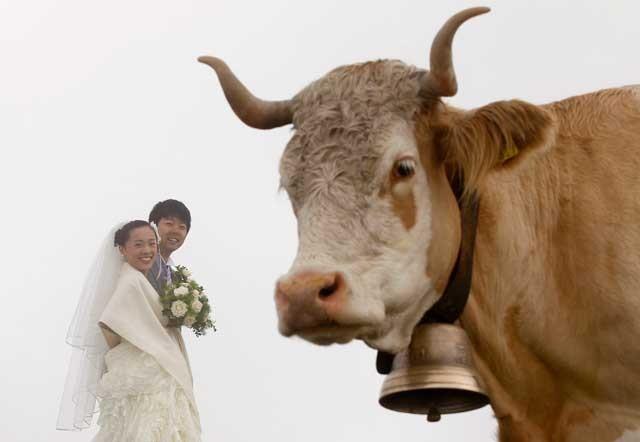 Ариса Ти и её свежеиспечённый муж Кэндзи Ёсида после своей свадебной церемонии, прошедшей на туманной горе Фирст (Швейцария)