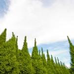japan_green_tokyo_03