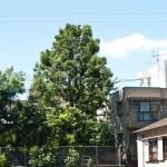 japan_green_tokyo_16