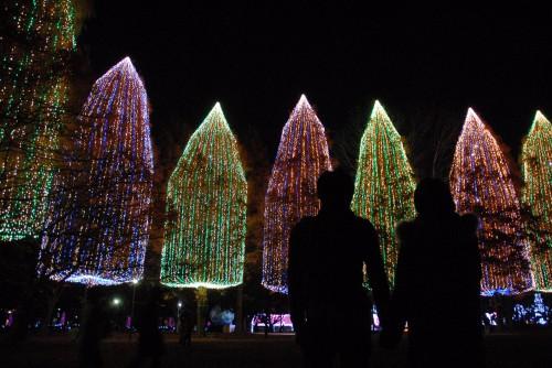 Украшенные яркими огнями деревья в парке Мотофутиэ