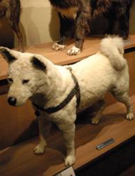 http://news.leit.ru/wp-content/uploads/2011/03/japan_hachiko.jpg