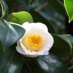 japan_spring_flowers_02