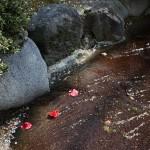 japan_spring_flowers_12