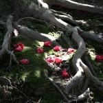 japan_spring_flowers_27
