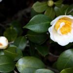 japan_spring_flowers_29