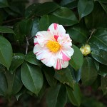 japan_spring_flowers_31