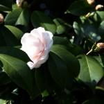 japan_spring_flowers_32