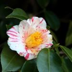 japan_spring_flowers_34