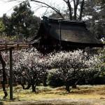 japan_spring_flowers_37