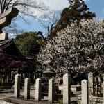 japan_spring_flowers_42