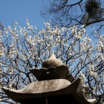 japan_spring_flowers_46