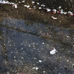Понятно, все дорожки засыпаны лепестками и цветочками
