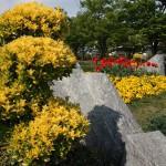 """Желтое слева - это не цветочки, это листики. Молодые листики желтые, а когда """"повзрослеют"""", становятся зелеными."""