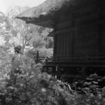 Разрушенный зал Сякадо (зал Будды Шакьямуни) в храме Тюсон-дзи. Июнь 1953 г.