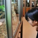 Посетительница рассматривает ящерицу в «Кафе с рептилиями». 11-е августа 2011 г.