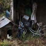 На заброшенной ферме в Иитатэ, 19-е ноября 2011 г.