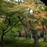 japan_tofuku-ji_autumn_2011_01
