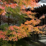 japan_tofuku-ji_autumn_2011_03