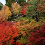 japan_tofuku-ji_autumn_2011_09