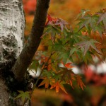 japan_tofuku-ji_autumn_2011_14