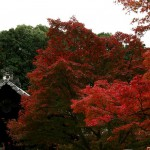 japan_tofuku-ji_autumn_2011_20