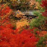 japan_tofuku-ji_autumn_2011_22