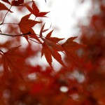 japan_tofuku-ji_autumn_2011_27