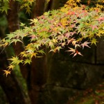 japan_tofuku-ji_autumn_2011_39