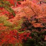 japan_tofuku-ji_autumn_2011_47