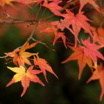 japan_tofuku-ji_autumn_2011_48