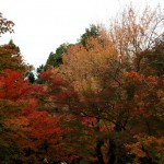 japan_tofuku-ji_autumn_2011_49
