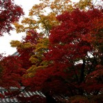 japan_tofuku-ji_autumn_2011_50